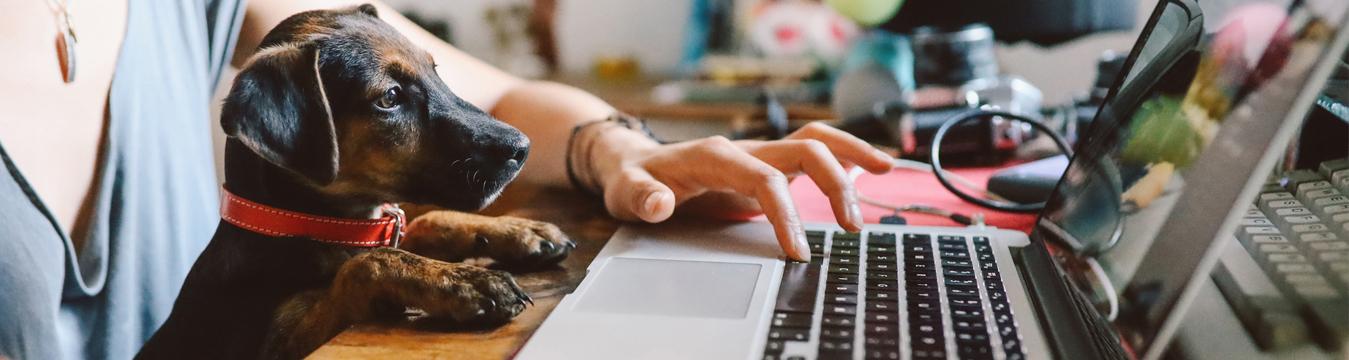 Capacítate online con los cursos sin costo de la plataforma de Sence